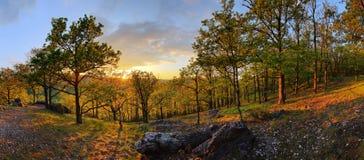 Skog med solen - panorama royaltyfri foto
