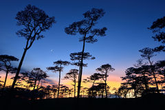 Skog med solnedgång Arkivfoto