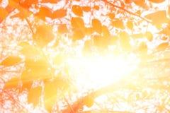 Skog med solsignalljuset Gräsplan lämnar tappningeffekt Sommar i skogen, abstrakt naturlig bakgrund med ny lövverk Fotografering för Bildbyråer