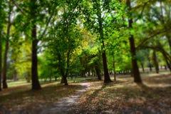 Skog med suddighet Royaltyfri Fotografi