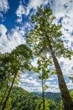 Skog med sunen bakom Arkivfoto