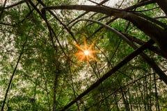 Skog med sunen bakom Royaltyfri Fotografi