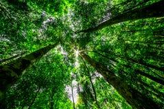 Skog med sunen bakom Fotografering för Bildbyråer
