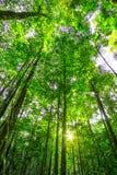 Skog med sunen bakom Arkivfoton
