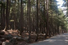 Skog med v?gen arkivbilder