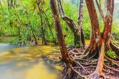 Skog med vatten Royaltyfri Bild