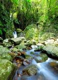 Skog med vattenfallet Arkivbilder