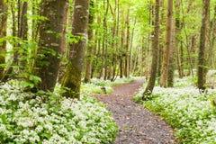 Skog med vita blommor. arkivfoton