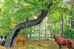 Skog mycket av djur royaltyfri bild