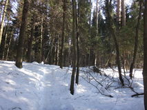 Skog mycket av snö Royaltyfria Foton