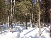 Skog mycket av snö Fotografering för Bildbyråer