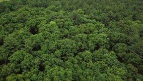Skog nära Boston Flyg- sikt från surret 4K arkivfilmer