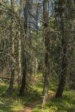 Skog nära den Vyssi Brod staden Arkivfoto