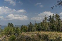 Skog nära den Vyssi Brod staden Arkivbilder