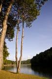skog nära floden Arkivbilder