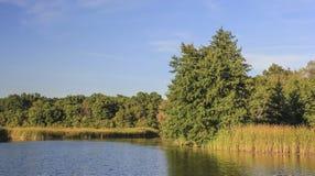 skog nära floden Arkivfoto