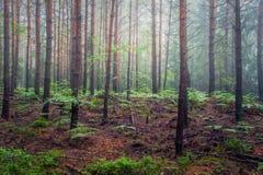 Skog nära la för Hrubà ¡ Skà ¡ - vaggastaden Arkivfoton