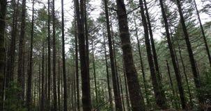 Skog nära Ribeiro Frio, madeiraö i Portugal, rulle Tid lager videofilmer