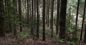 Skog nära Ribeiro Frio, madeiraö i Portugal, rulle Tid arkivfilmer