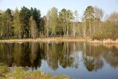 skog nära spegelyttersidan av vattenflodsjön med perfekt slät reflexion, förutom staden arkivfoto