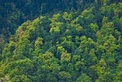 skog nepalese arkivbild
