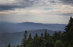 Skog och berg royaltyfri bild