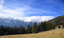 Skog och berg Royaltyfria Foton