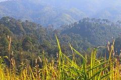 Skog och berg Royaltyfri Foto