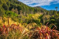 Skog och bergskedja på Wilson Bay, NZ Royaltyfri Foto
