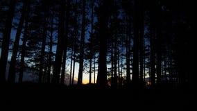 Skog och blå himmel efter solnedgång arkivbild