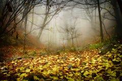Skog och dimma Arkivbild
