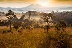 Skog och dimma i morgonen på Tung Salang Luang National Park Royaltyfri Fotografi