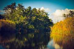 Skog och flod Royaltyfri Bild