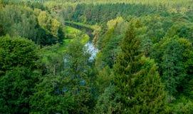 Skog och flod fotografering för bildbyråer