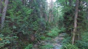 Skog och flod, flyg- sikt stock video