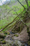 Skog och flod i en pittoresk klyfta på våren Fotografering för Bildbyråer