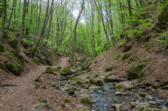 Skog och flod i en pittoresk klyfta på våren Arkivbild