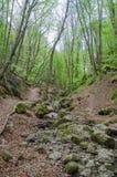 Skog och flod i en pittoresk klyfta på våren Arkivbilder