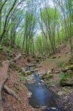 Skog och flod i en pittoresk klyfta på våren Arkivfoto