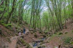 Skog och flod i en pittoresk klyfta på våren Royaltyfri Bild