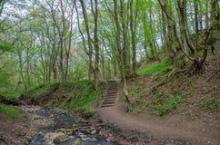 Skog och flod i en pittoresk klyfta på våren Arkivfoton