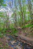 Skog och flod i en pittoresk klyfta på våren Royaltyfria Bilder