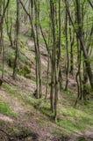 Skog och flod i en pittoresk klyfta på våren Royaltyfria Foton