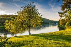 Skog och flod i vårtid royaltyfria foton