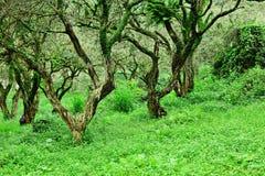 Skog och gräsplangräsmatta royaltyfri bild
