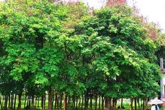 Skog och gr?nt djungeltr?d H?rligt naturligt landskap Djupa tropiska djungler H?sten landskap Nedg?ngbakgrund Skogsolljus f royaltyfria foton