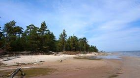 Skog och hav Fotografering för Bildbyråer