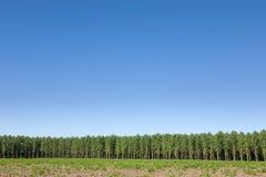 Skog och kristallklar himmel Arkivfoto