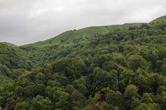 Skog och kullar, gröna ängar och moln Royaltyfria Foton