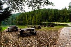 Skog och lake Arkivfoto